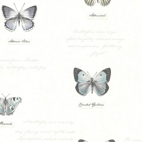 Admiral Butterflies and Script