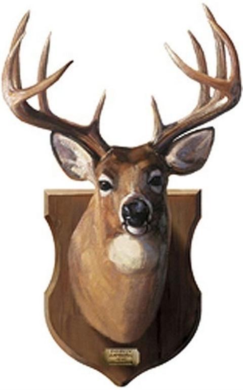 Deer Head Mount G0496sa Gifts For Guys Wall Murals