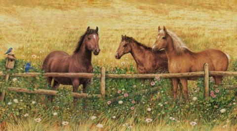 Horses At Fence - Wall Mural