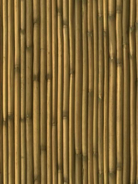 Bamboo Wallpaper 14459627 Destinations By The Shore
