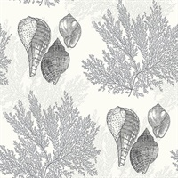 Nauset Black Seashell Shores Wallpaper