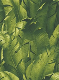 Tropical Banana leaf